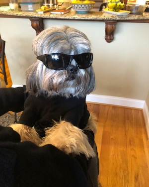 Today I was visiting Uncle Joe and Aunt Terri. It was very sunny so Uncle Joe gave me his sunglasses. I think I look really cool.